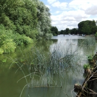 Reeds in the water looking across the Thames