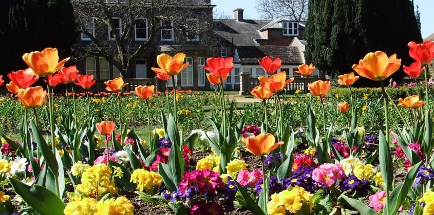 Tulips and other bright spring flowers in the park