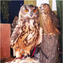 Owls in town this saturday