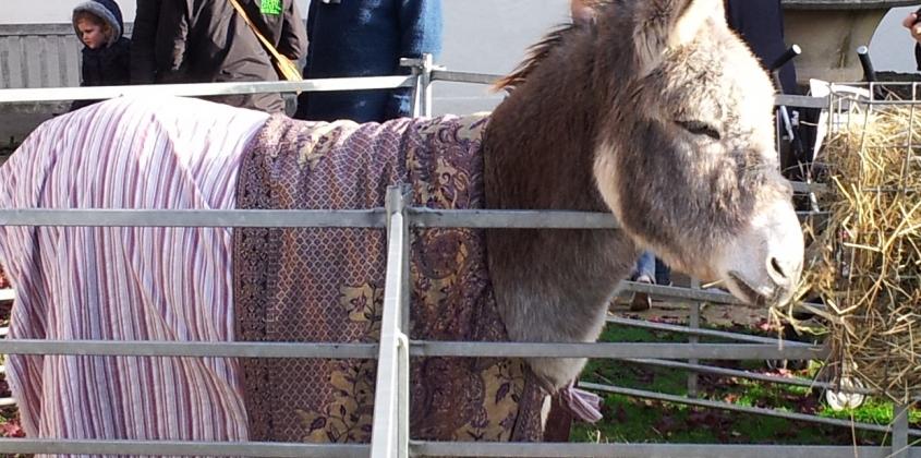 Donkeys in Abingdon-on-Thames