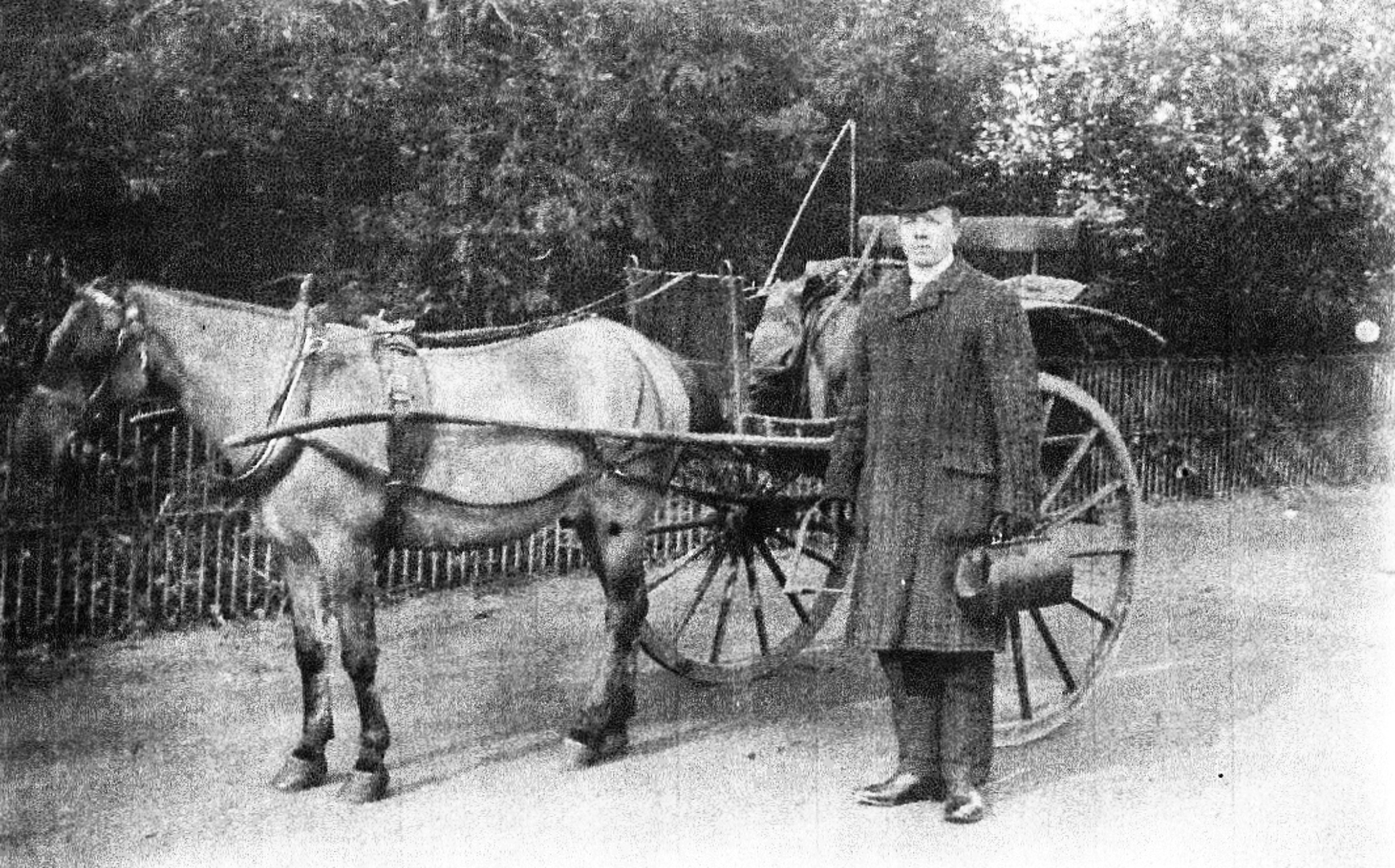 Mr Stayte the tailor with transport in about 1900